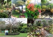 Winners of the 2017 Natalie Belmonte Great Yards Award and the Broward County NatureScape Emerald Award to be recognized