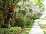 palm tree and bush lined street with sidewalk