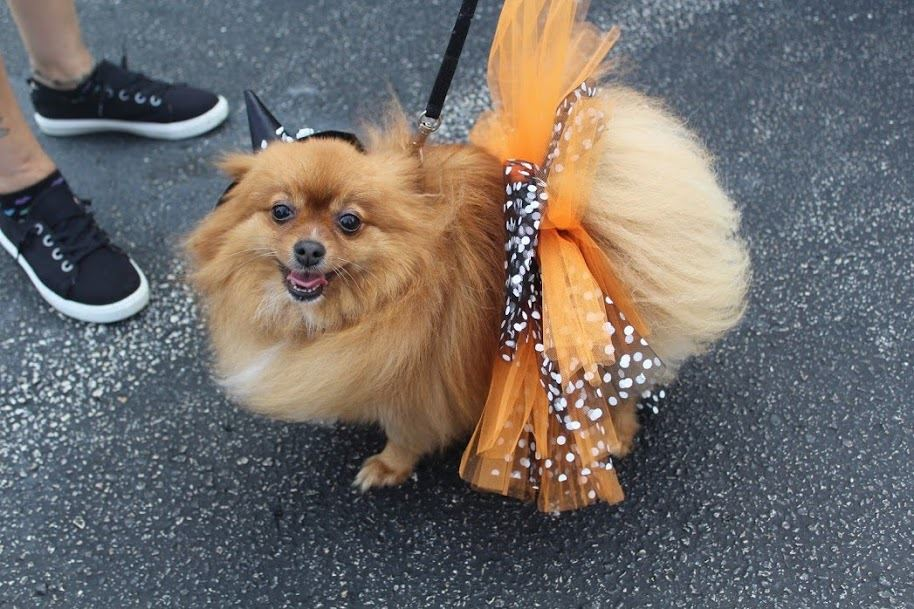 Picture of dog in costume for Bow-Wow Ween