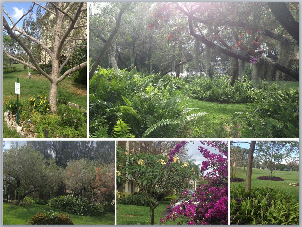 Landscape Borders Pembroke Pines : Pembroke pines fl official website landscape programs and events